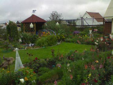 Как оформить участок в собственность по садовой, членской книжке в 2020 г.